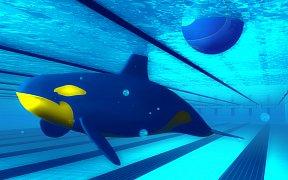 orka-plavani-3